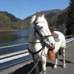 Wanderreiten im Naturpark Südschwarzwald