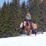 Pferdetrekking für Erwachsene