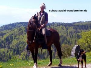 Pferdetrekking, Tages- und Mehrtagestouren für Erwachsene