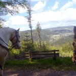 Tagestour über den Glaserberg Wanderreiten für Erwachsene